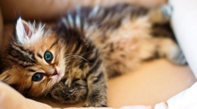 Советы ухода за котятами
