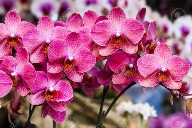 Особенности ухода за орхидеями