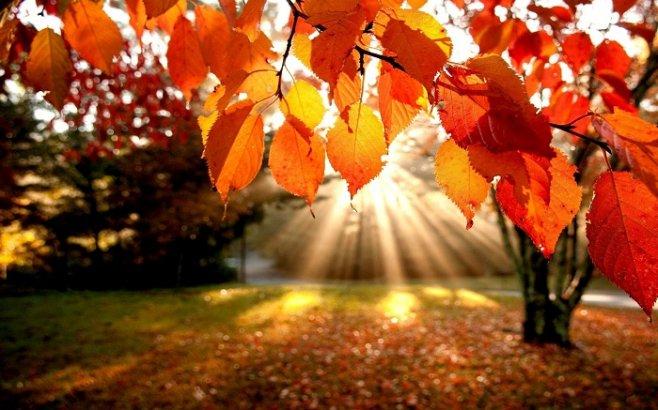 Что делать осенью: список 100 важных дел на осень
