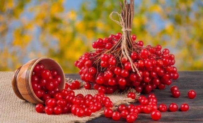 Лечение и профилактика сезонных заболеваний , калина с медом - настоящая кладезь витаминов