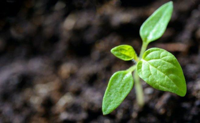 О борьбе с сорняками внутри себя
